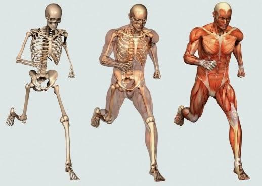 musculo esqueleticos